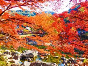 ハローストレージ 豊田市のアイキャッチ画像
